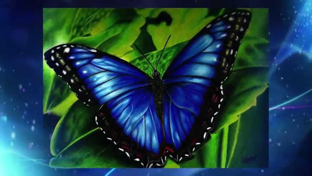 3d Watch Wallpaper Drawing A Blue Butterfly Dibujando Una Mariposa Azul Youtube