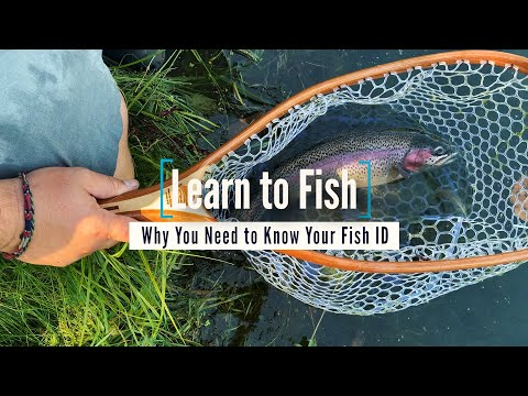 Learn To Fish: Why You Need To Know Your Fish ID | GoFishBC