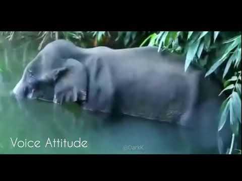 india-karela-elephant-died😞