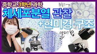 [중학교과학실험] 현미경으로 체세포분열 과정 관찰하기(…