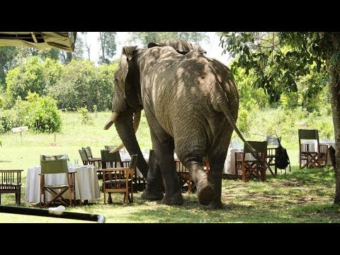 Top10 Recommended Luxury Tents In Talek, Kenya (Maasai Mara National Reserve)