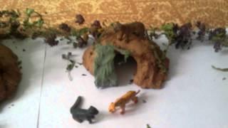 Коты воители. Мой лагерь Грозового племени !