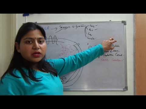 G-Protein Coupled Receptors-Part2