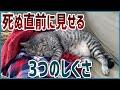 【豆知識】猫が死ぬ直前に好きな人にしか見せない3つの行動