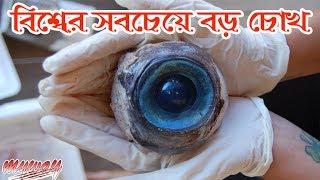 সমুদ্রতটে খুঁজে পাওয়া কিছু রহস্যময় জিনিস || Most Mysterious Things Found On The Beach