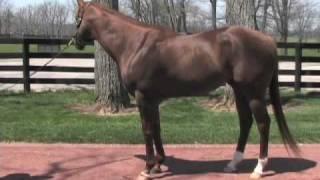 Smarty Jones 2004 Kentucky Derby Winner