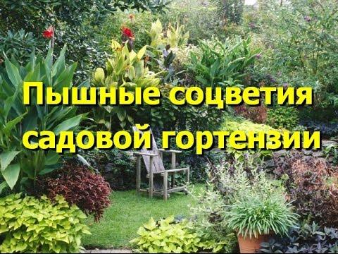 Садовые гортензии как сажать и ухаживать Популярные виды