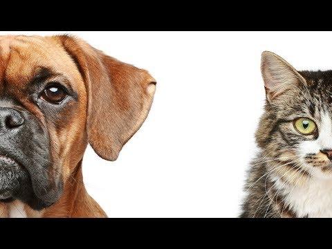 Dogs versus Cats