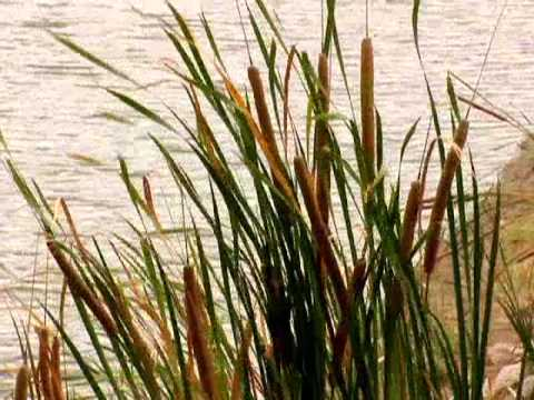 Identifying Weeds In Ponds