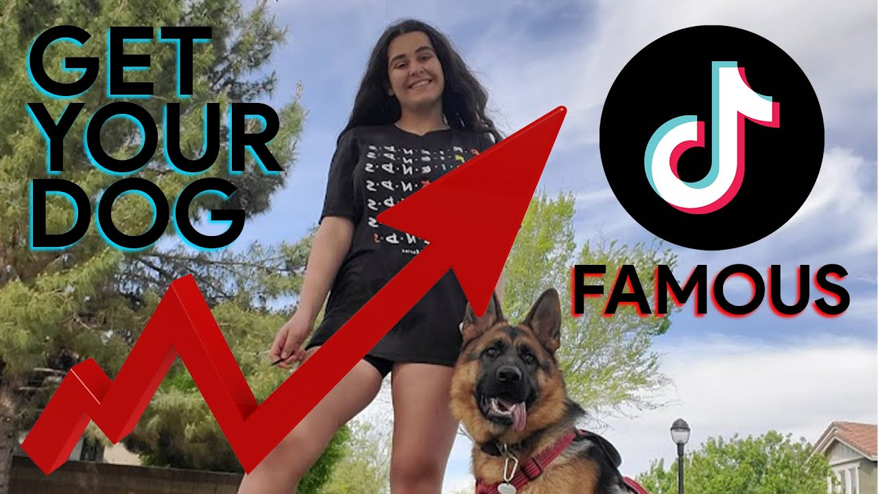 How To Get Your Dog Famous On Tiktok In 5 Easy Steps Youtube