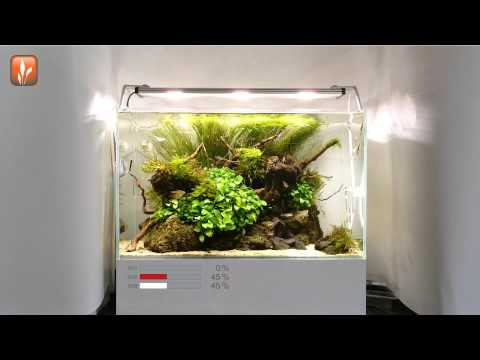 led aquarium beleuchtung daytime cluster control mit ta doovi. Black Bedroom Furniture Sets. Home Design Ideas