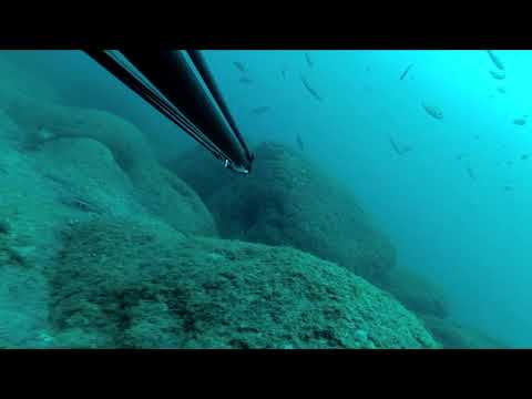 Spearfishing 2017 at Pico Island, Azores