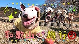 和歌山プチ旅行2日目☆ 黒沢牧場へ     ドッグランがあって、牛や馬と近...