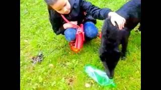 Поймали бездомную собаку