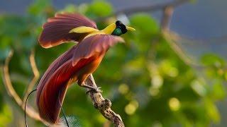 Самые красивые птицы на планете Земля!