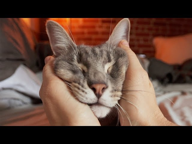 Squishy Cat Massage