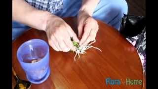 Размножение дендробиума нобиле детками(Видео о том, как отделить деток от орхидеи дендробиум нобиле и поселить их в отдельном горшке. Хотите подроб..., 2013-05-10T09:56:24.000Z)