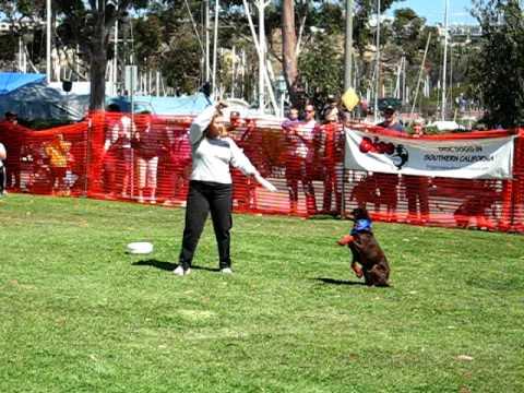 how to teach a dog frisbee tricks