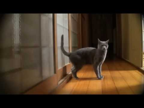 Cat Knocks on Door