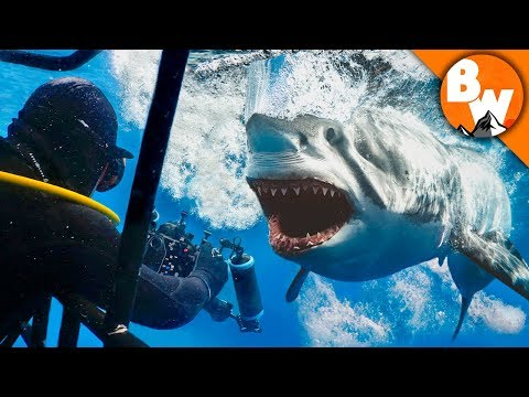 Face to Face With a Great White Shark!