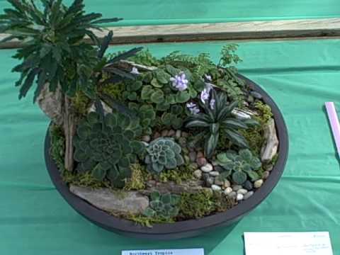 Gesneriad Dish Garden - YouTube