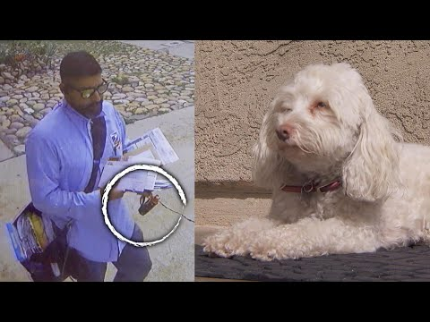 V Mornings - Postal Worker Caught on Video Apparently Spraying Dog with Pepper Spray