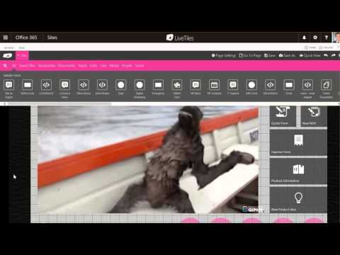 Embed a Giphy | LiveTiles Design