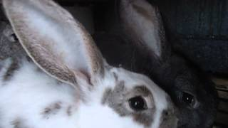 Разведение и содержание кроликов, клетки для них, кормление(Видео №2)(, 2016-03-01T18:03:11.000Z)