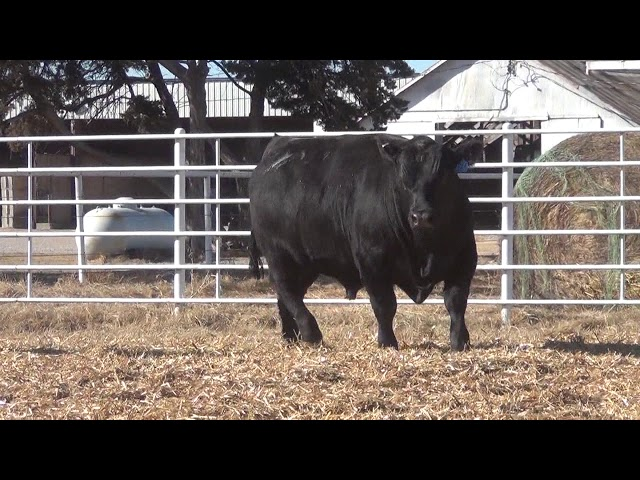 Express Ranches Lot 365
