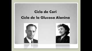 Ciclo de Cori y de la glucosa alanina