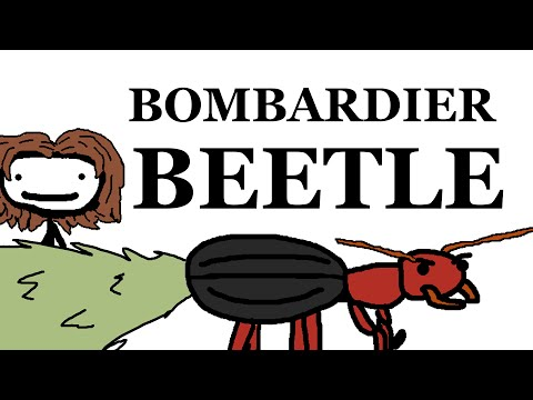 The Bombardier Beetle