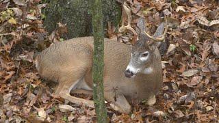 Gambar cover Top 5 Deer Hunting Myths