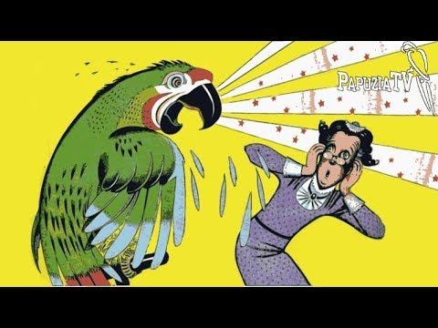 Agresja U Papug A Złe Wychowanie