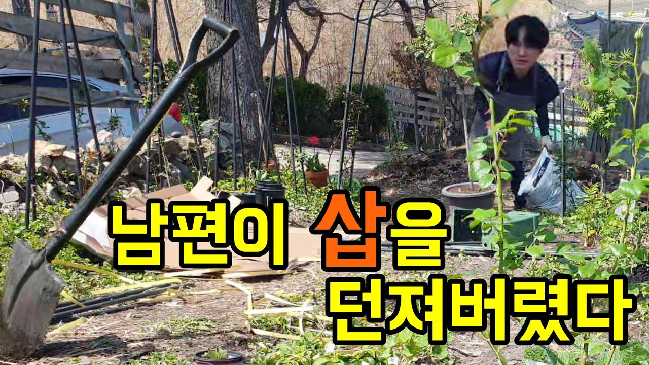 누구나 쉽게 할 수 있는 정원에 장미 심기