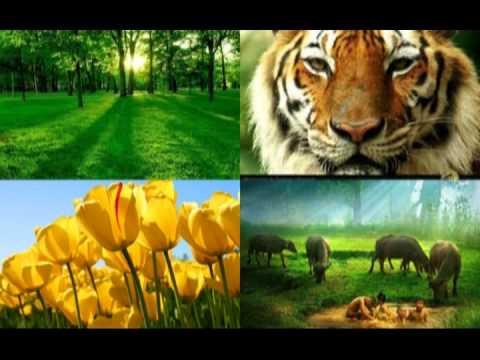 ความหลากหลายทางชีวภาพ Biodiversity