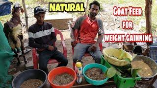 Natural Goat Feed for weight gaining | वजन बढ़ाने के लिए प्राकृतिक बकरी फ़ीड | Watch full video