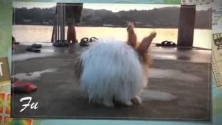 พาลูกฟูเที่ยว my rabbit