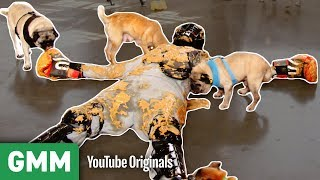 Download Covered in Peanut Butter and Pugs | THAT'S A BAD IDEA Mp3 and Videos