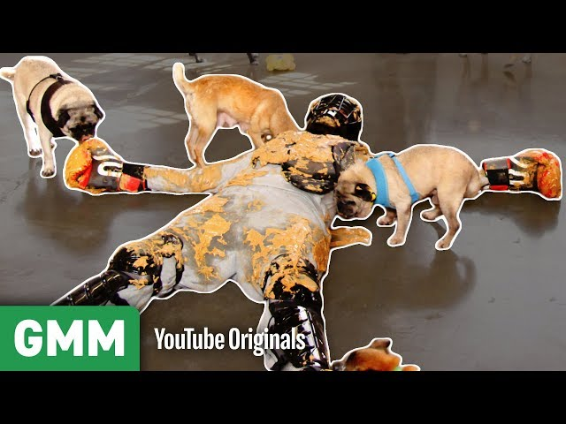 Covered in Peanut Butter and Pugs | THAT'S A BAD IDEA