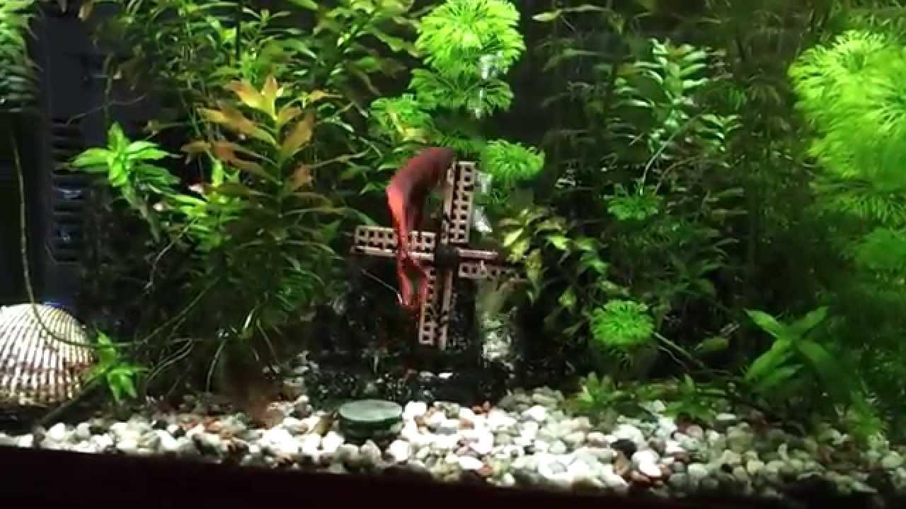 Indahnya Aquariumku,Aquascape. tanpa co2 tanaman tumbuh ...