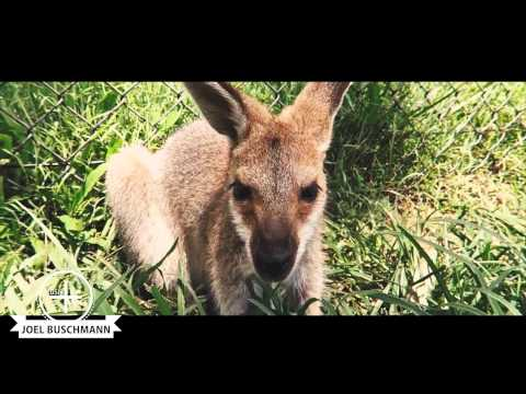 BEST OF BRISBANE AUSTRALIA WORK TRAVEL GUIDE filmed by schwarzsehen| Joel Buschmann