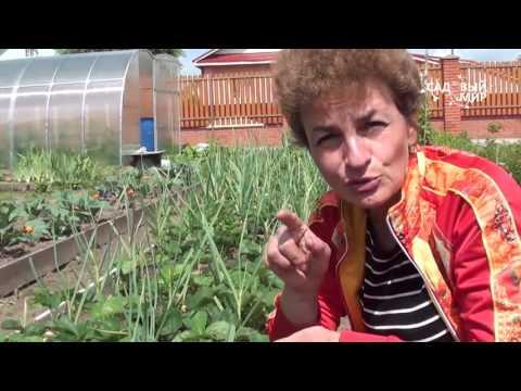 Как размножать клубнику садовую землянику. Сайт Садовый мир