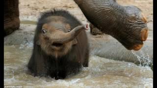 От Joke Pro - самые смешные фото животных, слайд шоу животные