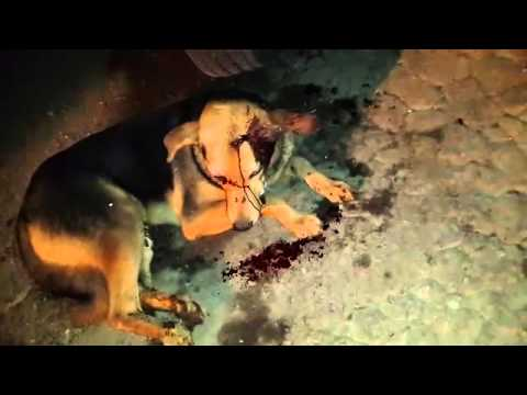 Attacks By Abusers On Stray Dogs In Salmabad Area In Bahrain Youtube