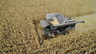 UNIQUE in EUROPE !! FENDT IDEAL 8T in Corn Harvest !