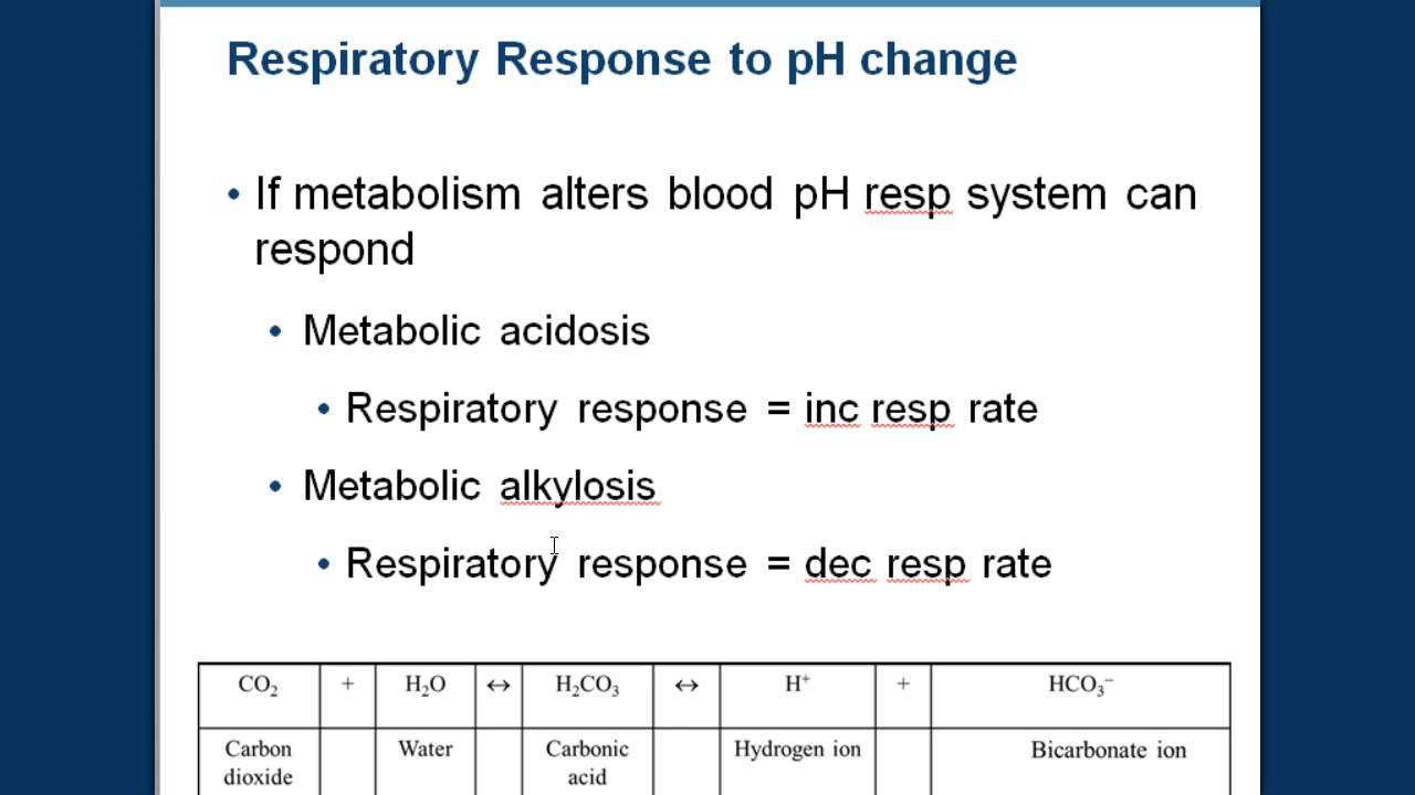 Respiration And Blood Ph Youtube