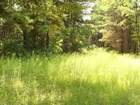 Homes for Sale - 527 County Road 6020 Salem MO 65560 - Violet Fulton