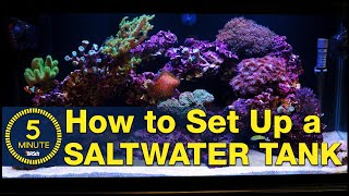Saltwater aquarium setup - A simple, easy guide in 5 minute steps.