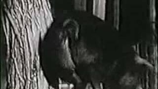 sesame street pig film original w pig noises