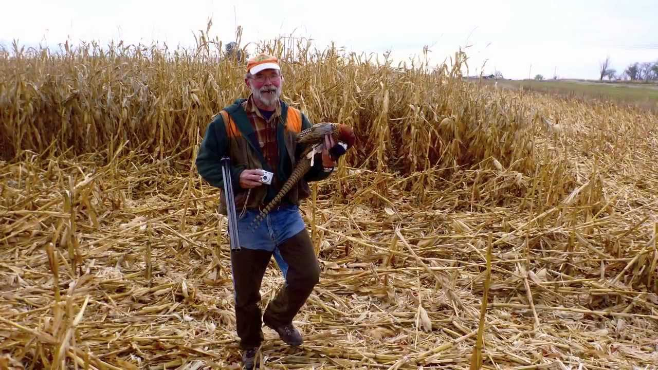 Hunting wild pheasant in idaho youtube for Idaho out of state fishing license